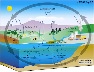 human carbon cycle perturbation Carbon Sinks List by Size